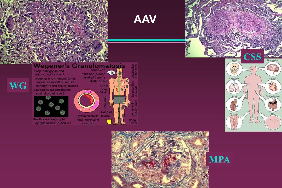AAV CSS WG MPA