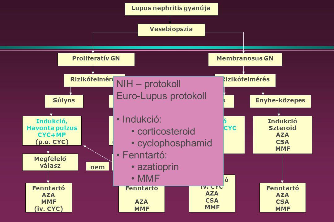 Lupus nephritis gyanúja