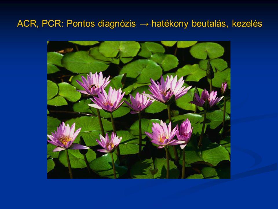 ACR, PCR: Pontos diagnózis → hatékony beutalás, kezelés