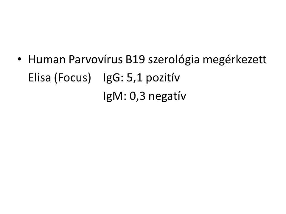 Human Parvovírus B19 szerológia megérkezett