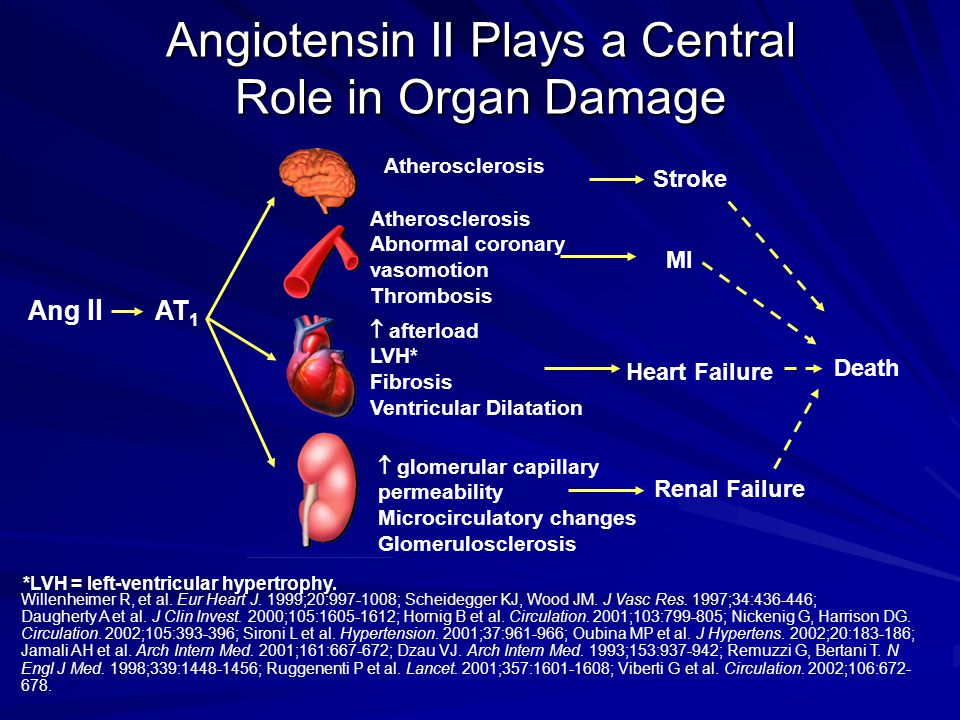 Angiotensin II Plays a Central Role in Organ Damage
