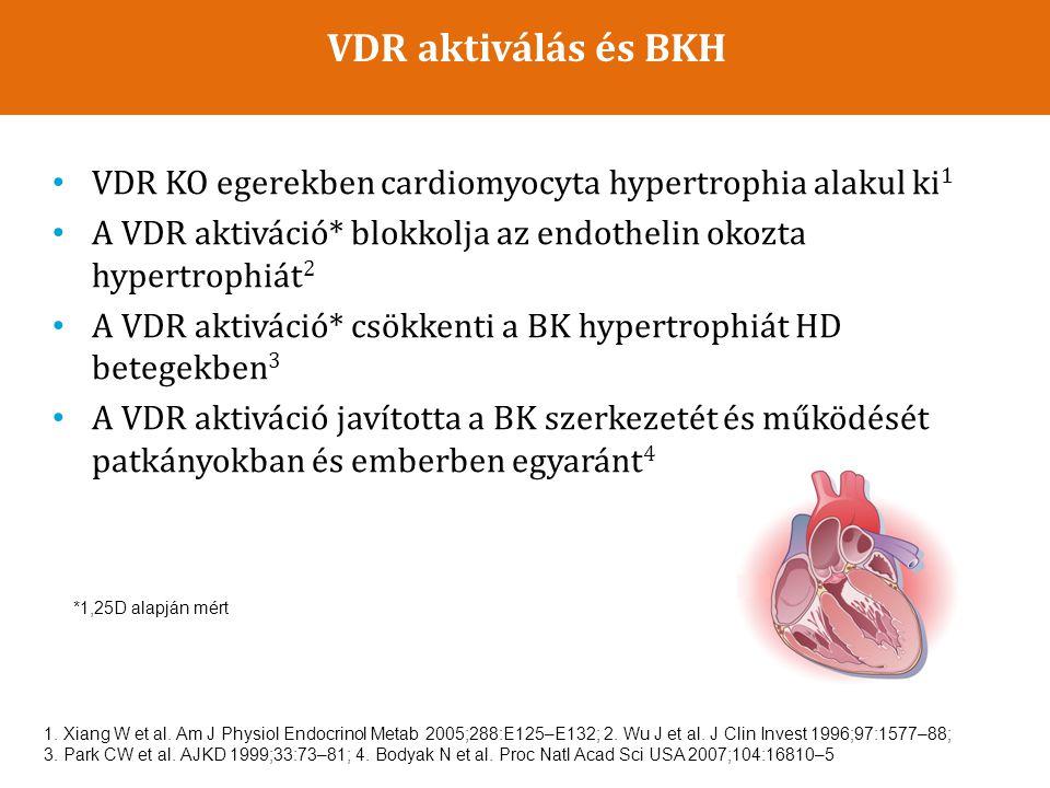VDR aktiválás és BKH VDR KO egerekben cardiomyocyta hypertrophia alakul ki1. A VDR aktiváció* blokkolja az endothelin okozta hypertrophiát2.