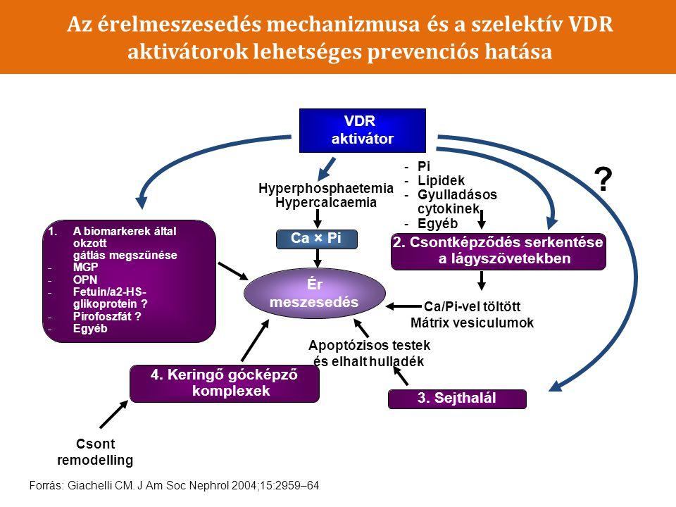 Az érelmeszesedés mechanizmusa és a szelektív VDR aktivátorok lehetséges prevenciós hatása