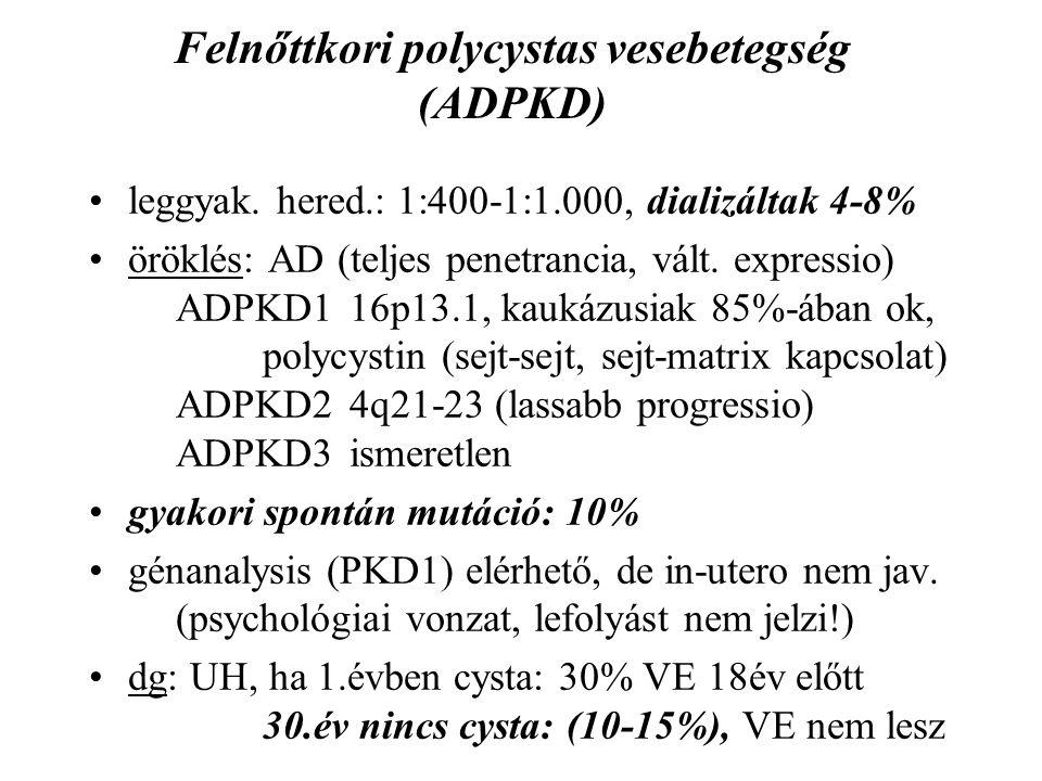 Felnőttkori polycystas vesebetegség (ADPKD)