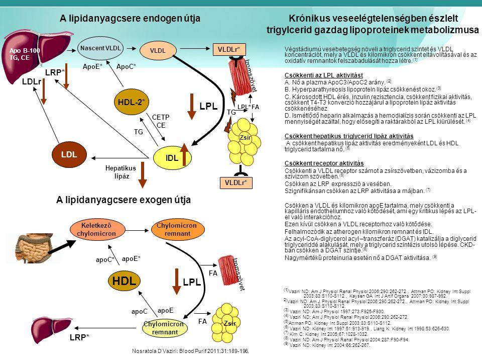 HDL A lipidanyagcsere endogen útja