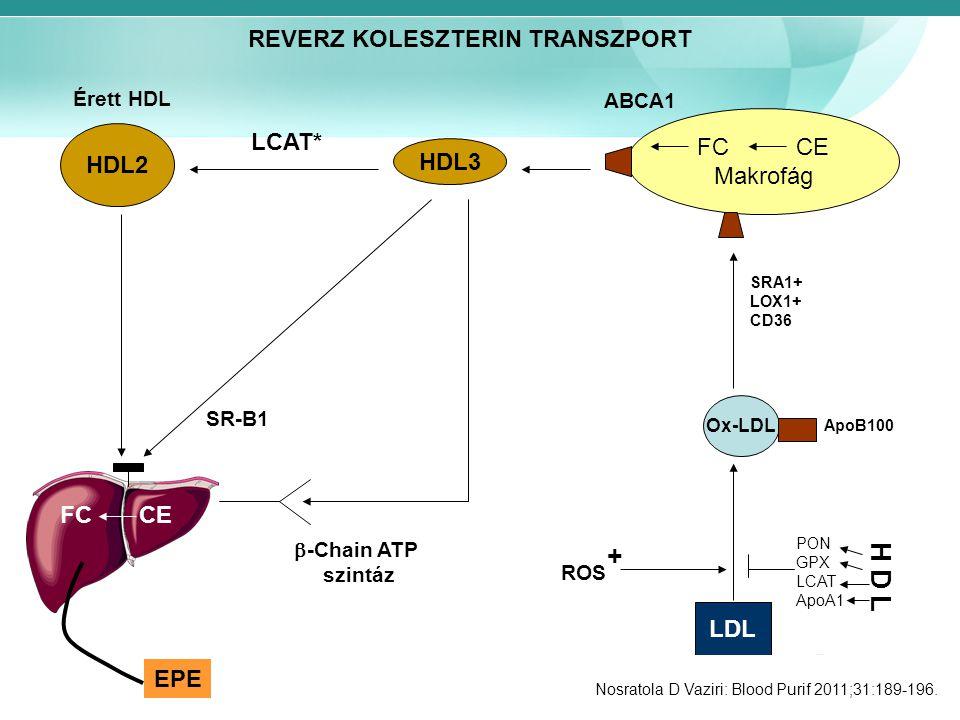 + H D L REVERZ KOLESZTERIN TRANSZPORT FC CE LCAT* HDL2 Makrofág HDL3