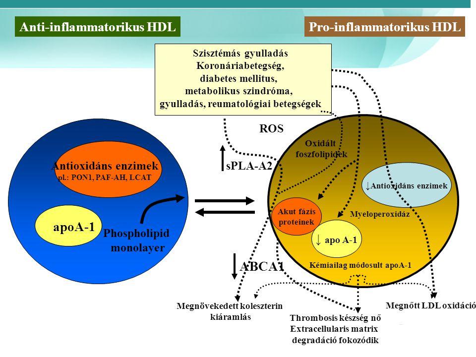 Anti-inflammatorikus HDL Pro-inflammatorikus HDL