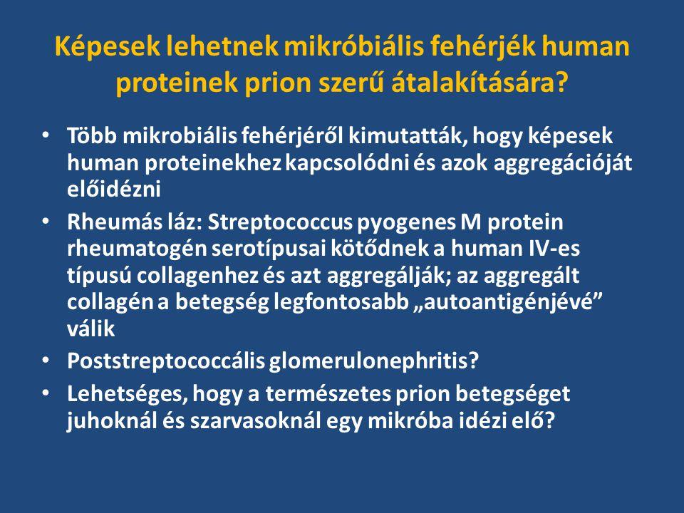 Képesek lehetnek mikróbiális fehérjék human proteinek prion szerű átalakítására