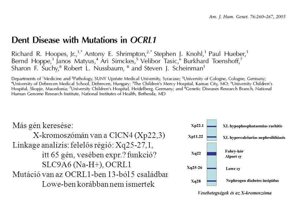 Más gén keresése: X-kromoszómán van a ClCN4 (Xp22,3) Linkage analízis: felelős régió: Xq25-27,1, itt 65 gén, vesében expr. funkció