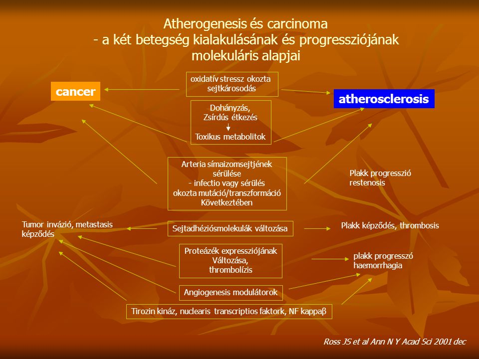 Atherogenesis és carcinoma