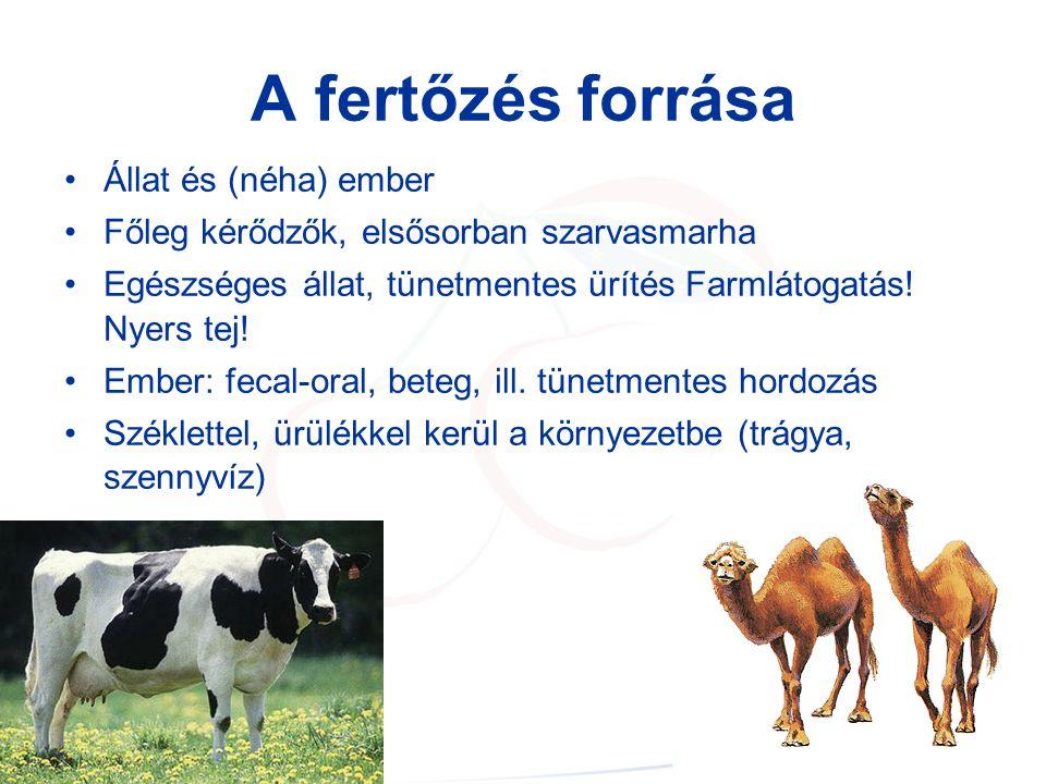 A fertőzés forrása Állat és (néha) ember