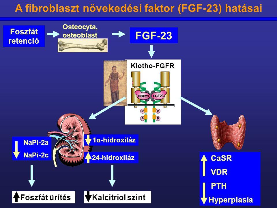 A fibroblaszt növekedési faktor (FGF-23) hatásai