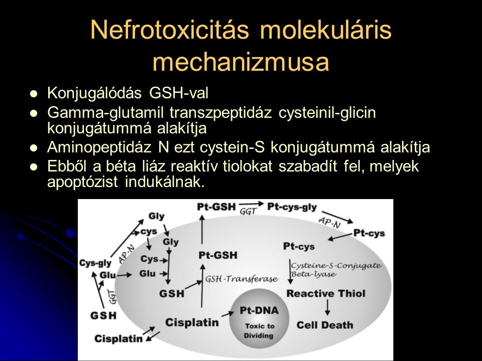 Nefrotoxicitás molekuláris mechanizmusa