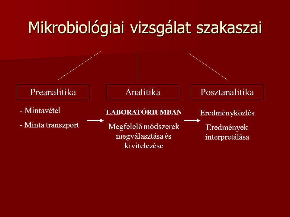 Mikrobiológiai vizsgálat szakaszai