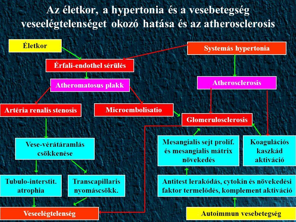 Az életkor, a hypertonia és a vesebetegség veseelégtelenséget okozó hatása és az atherosclerosis