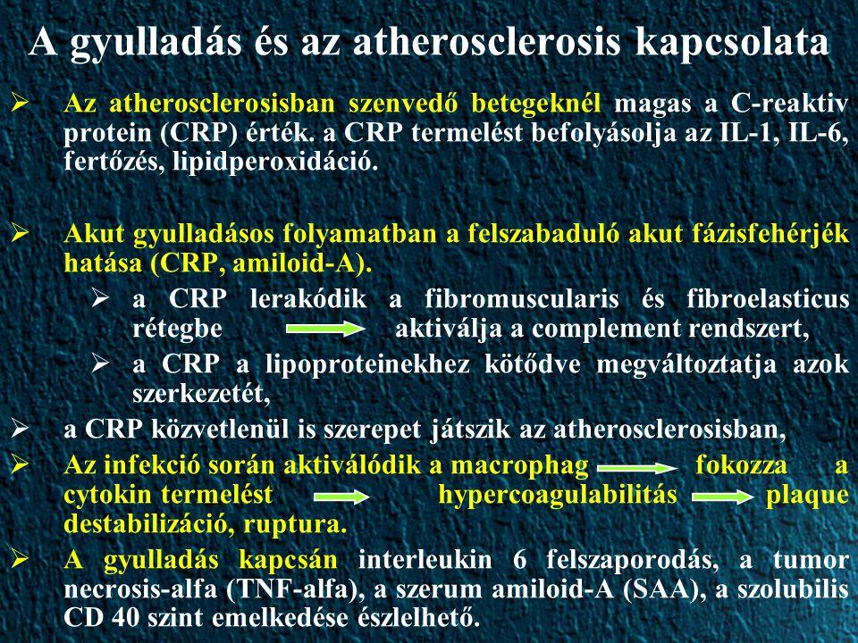 A gyulladás és az atherosclerosis kapcsolata