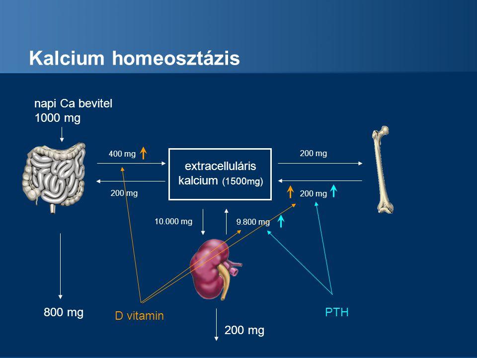 Kalcium homeosztázis napi Ca bevitel 1000 mg extracelluláris