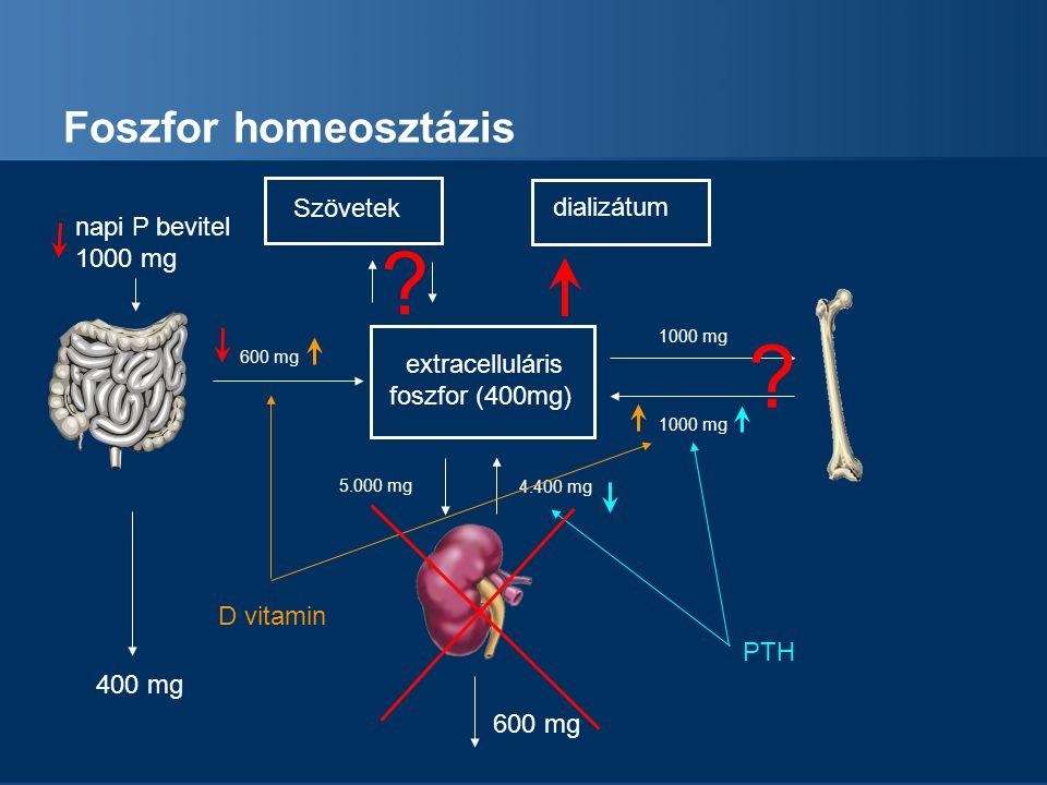 Foszfor homeosztázis Szövetek dializátum napi P bevitel 1000 mg