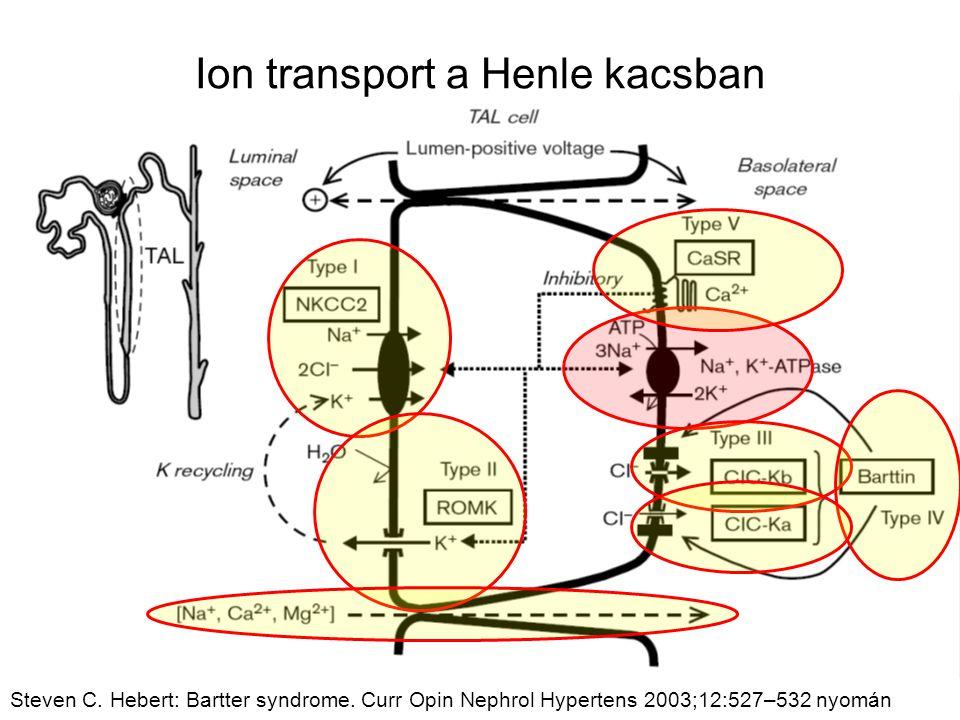 Ion transport a Henle kacsban