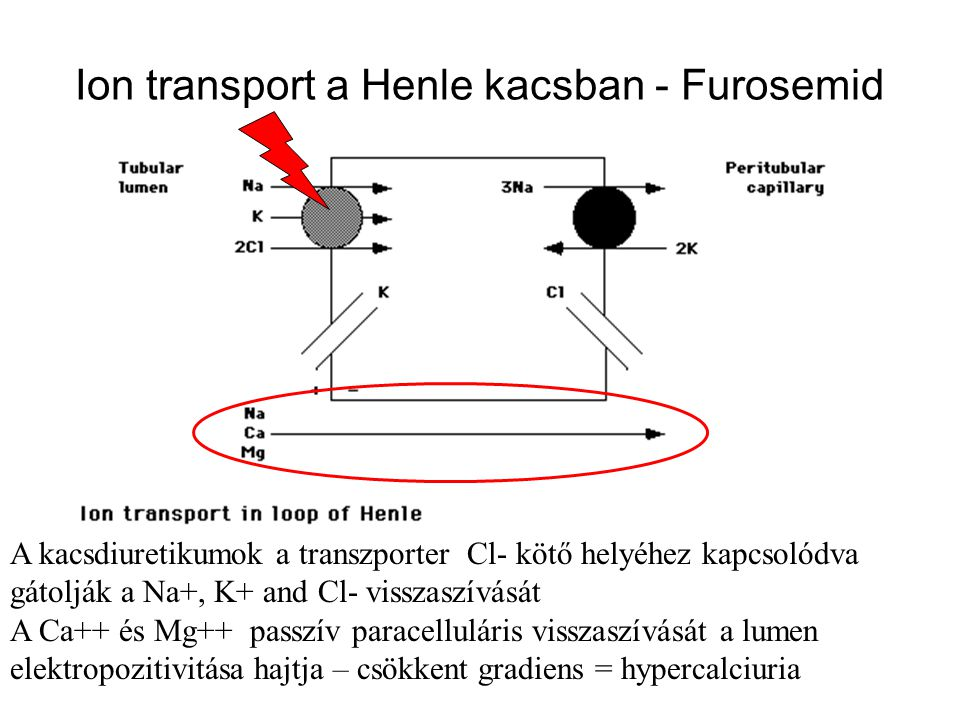 Ion transport a Henle kacsban - Furosemid