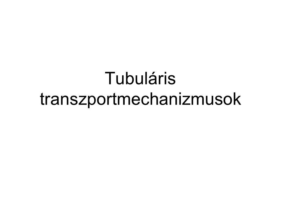 Tubuláris transzportmechanizmusok