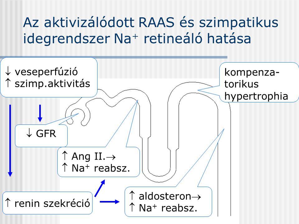 Az aktivizálódott RAAS és szimpatikus idegrendszer Na+ retineáló hatása
