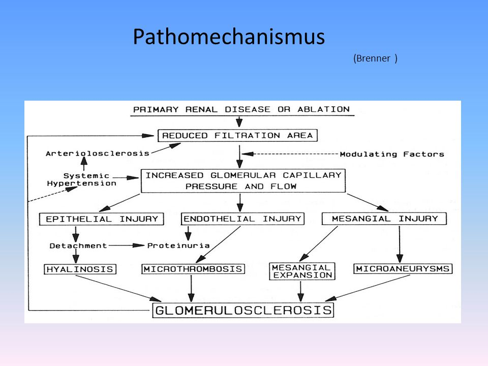 Pathomechanismus (Brenner )