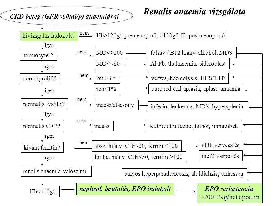 Renalis anaemia vizsgálata