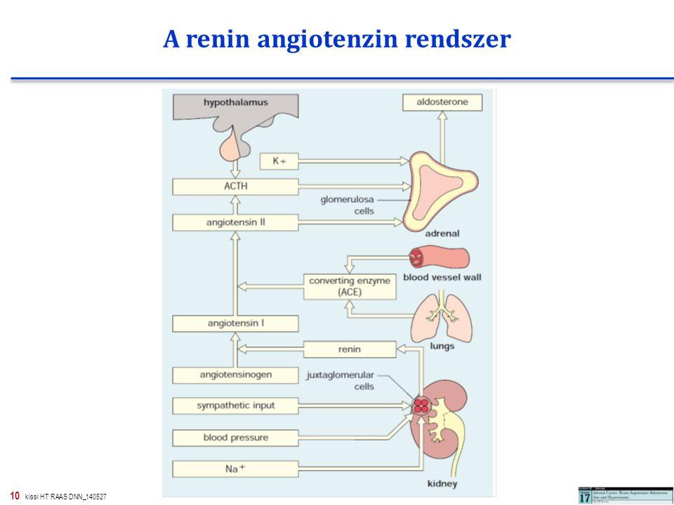 A renin angiotenzin rendszer