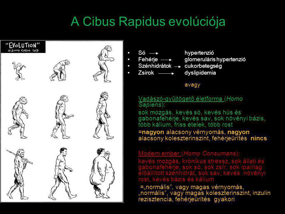 A Cibus Rapidus evolúciója