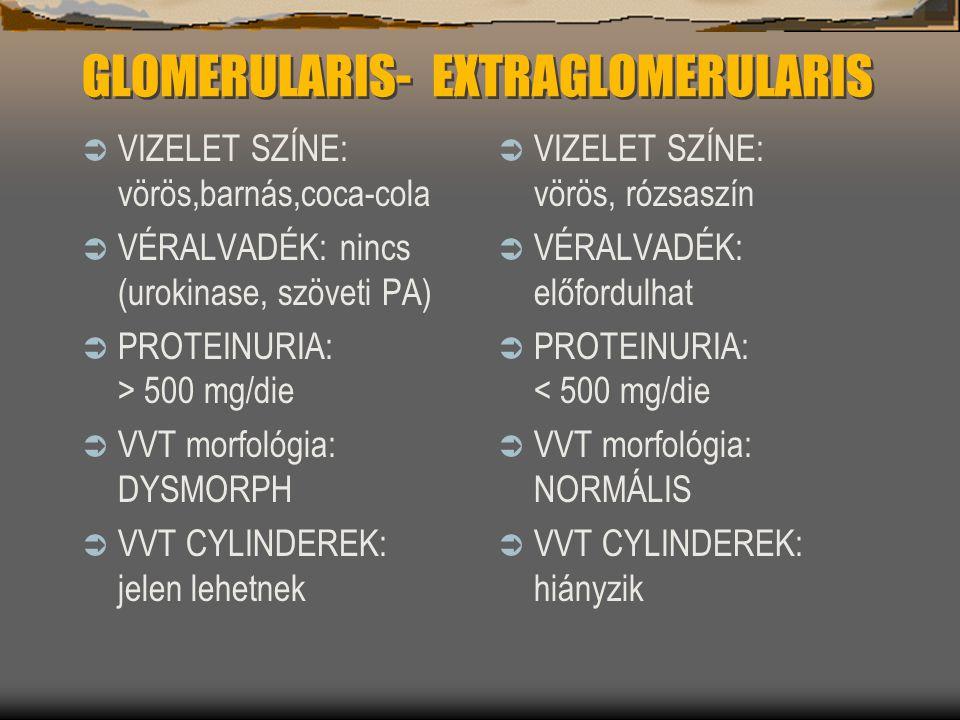 GLOMERULARIS- EXTRAGLOMERULARIS
