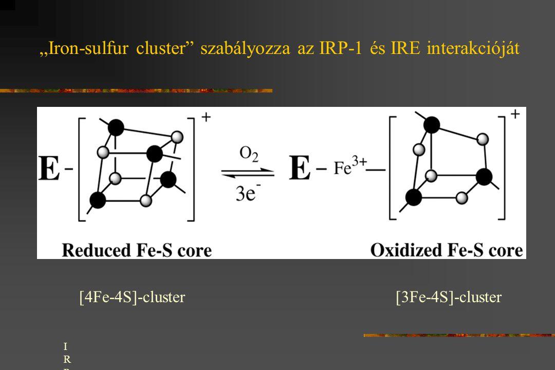 """""""Iron-sulfur cluster szabályozza az IRP-1 és IRE interakcióját"""