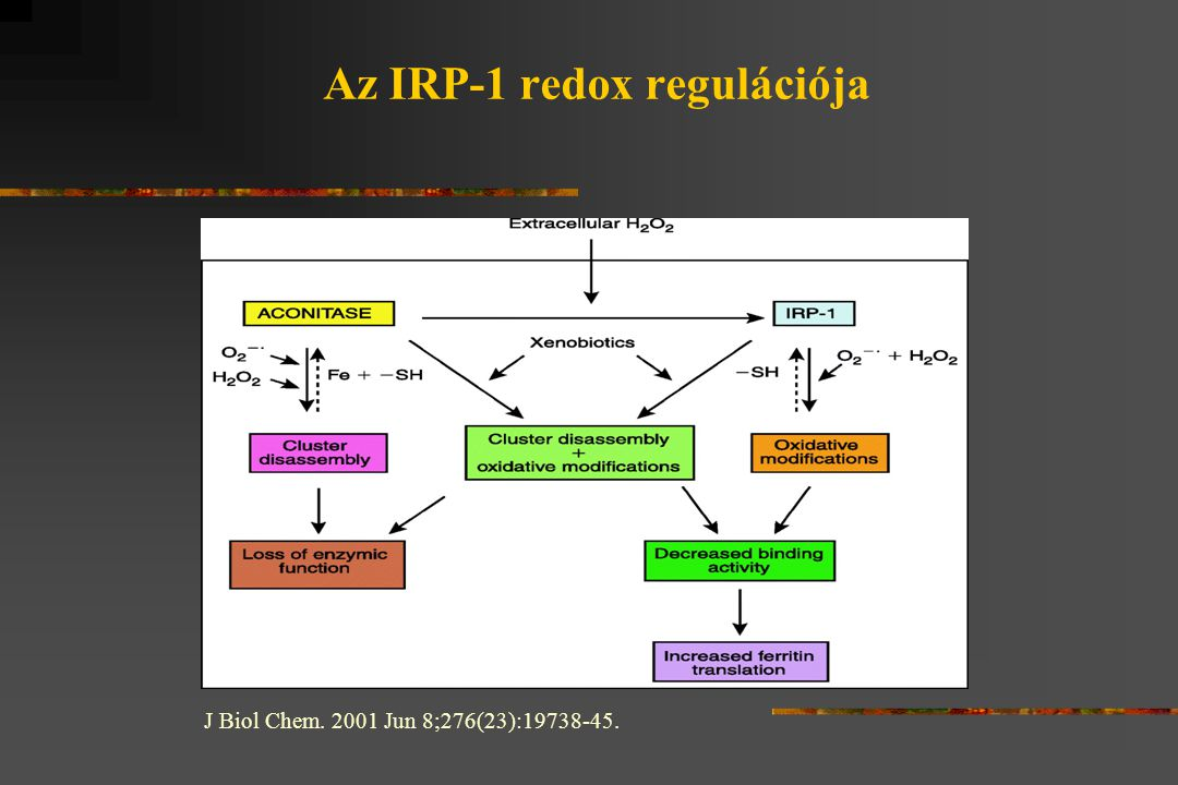 Az IRP-1 redox regulációja