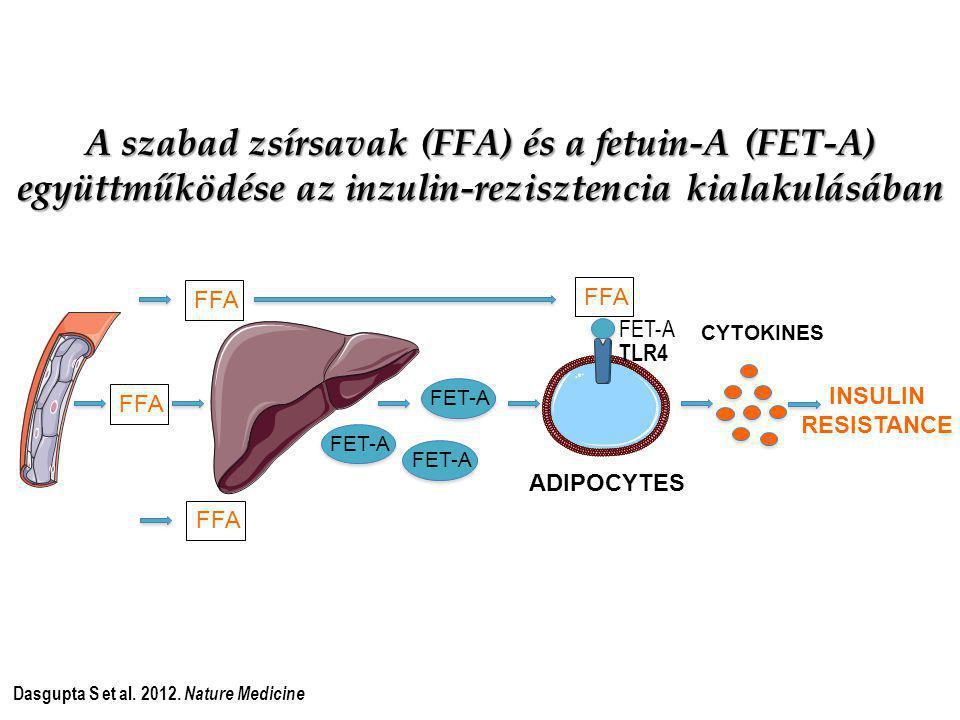 A szabad zsírsavak (FFA) és a fetuin-A (FET-A) együttműködése az inzulin-rezisztencia kialakulásában