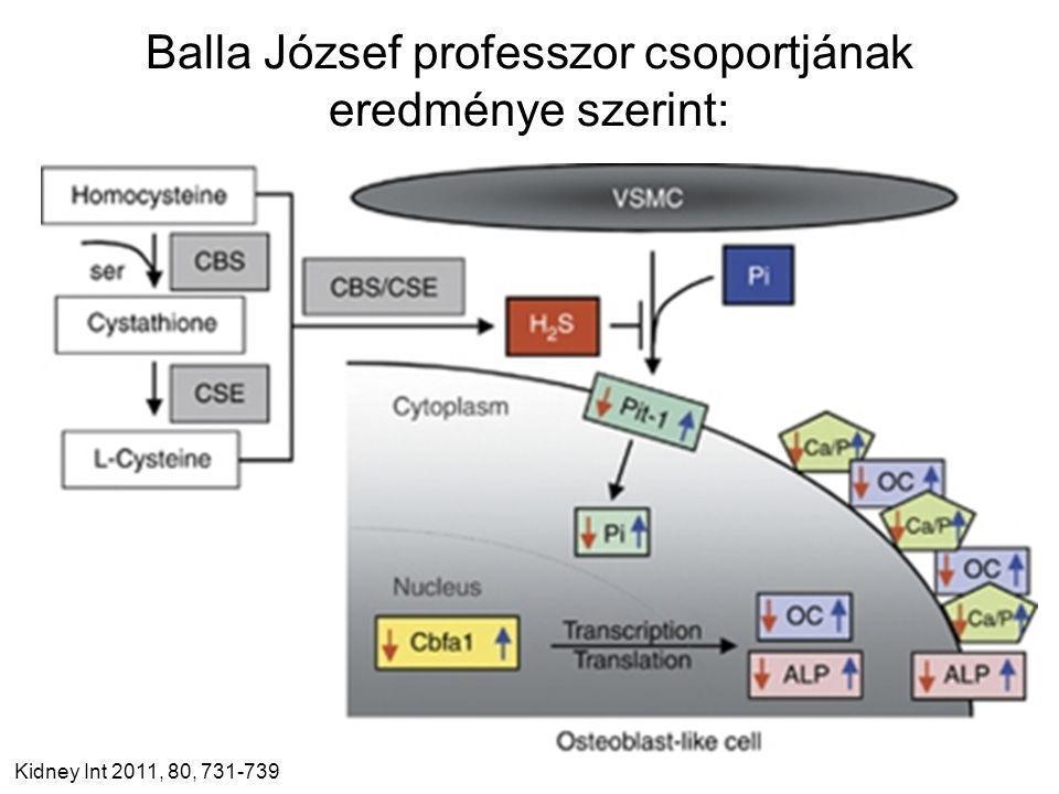 Balla József professzor csoportjának eredménye szerint: