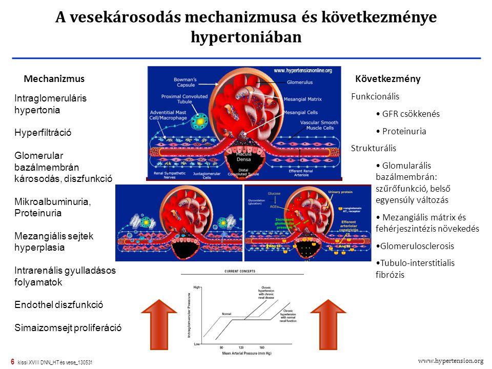 A vesekárosodás mechanizmusa és következménye hypertoniában
