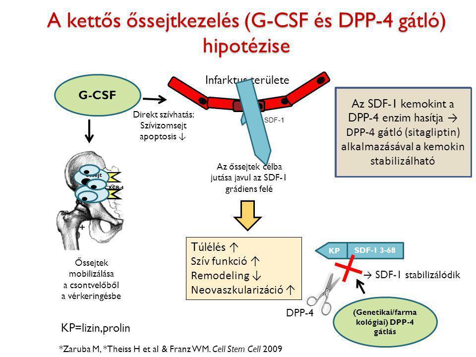 A kettős őssejtkezelés (G-CSF és DPP-4 gátló) hipotézise