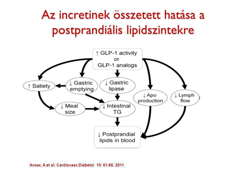 Az incretinek összetett hatása a postprandiális lipidszintekre