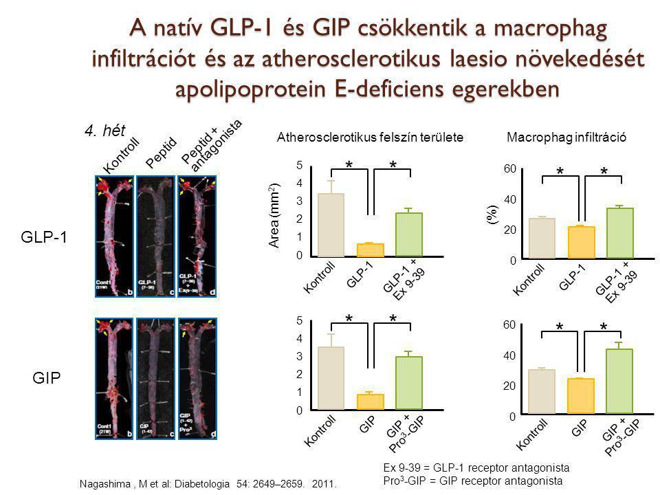 A natív GLP-1 és GIP csökkentik a macrophag infiltrációt és az atherosclerotikus laesio növekedését apolipoprotein E-deficiens egerekben