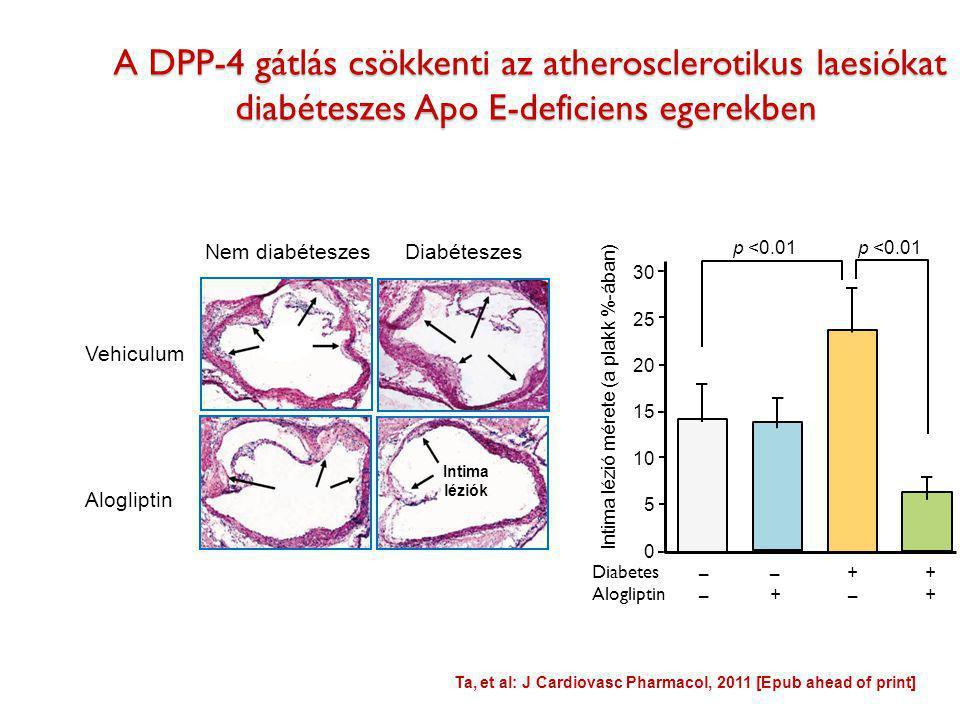 A DPP-4 gátlás csökkenti az atherosclerotikus laesiókat diabéteszes Apo E-deficiens egerekben