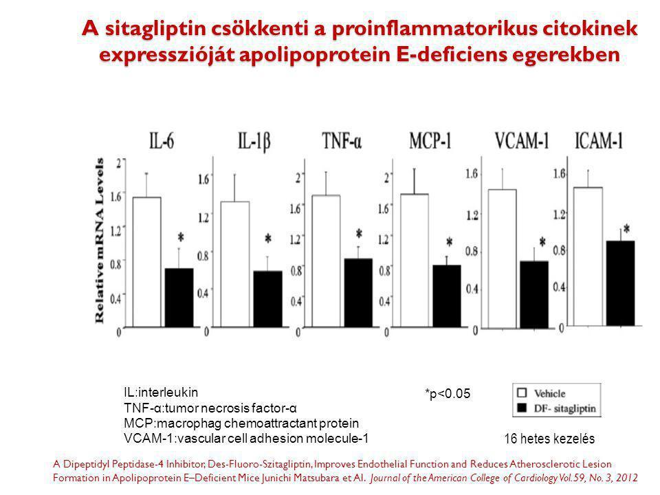 A sitagliptin csökkenti a proinflammatorikus citokinek expresszióját apolipoprotein E-deficiens egerekben