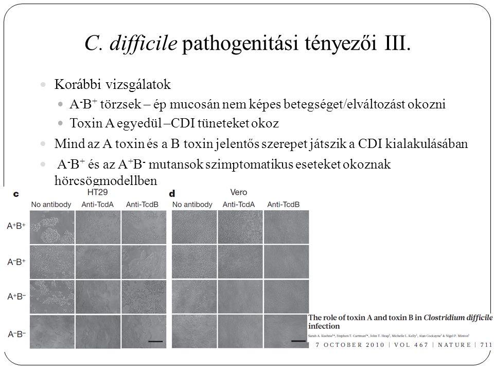 C. difficile pathogenitási tényezői III.