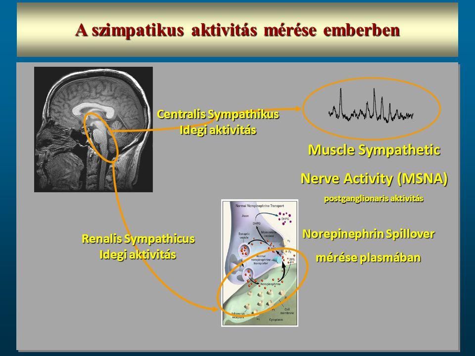 A szimpatikus aktivitás mérése emberben