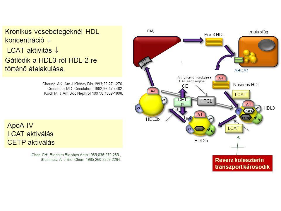 Krónikus vesebetegeknél HDL koncentráció  LCAT aktivitás  Gátlódik a HDL3-ról HDL-2-re történő átalakulása.