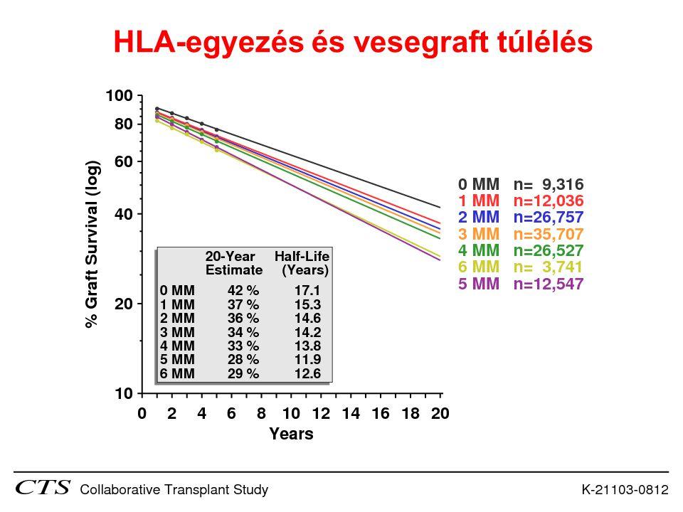HLA-egyezés és vesegraft túlélés