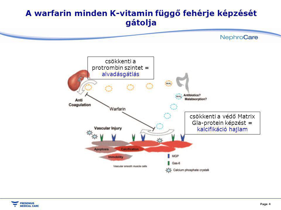 A warfarin minden K-vitamin függő fehérje képzését gátolja