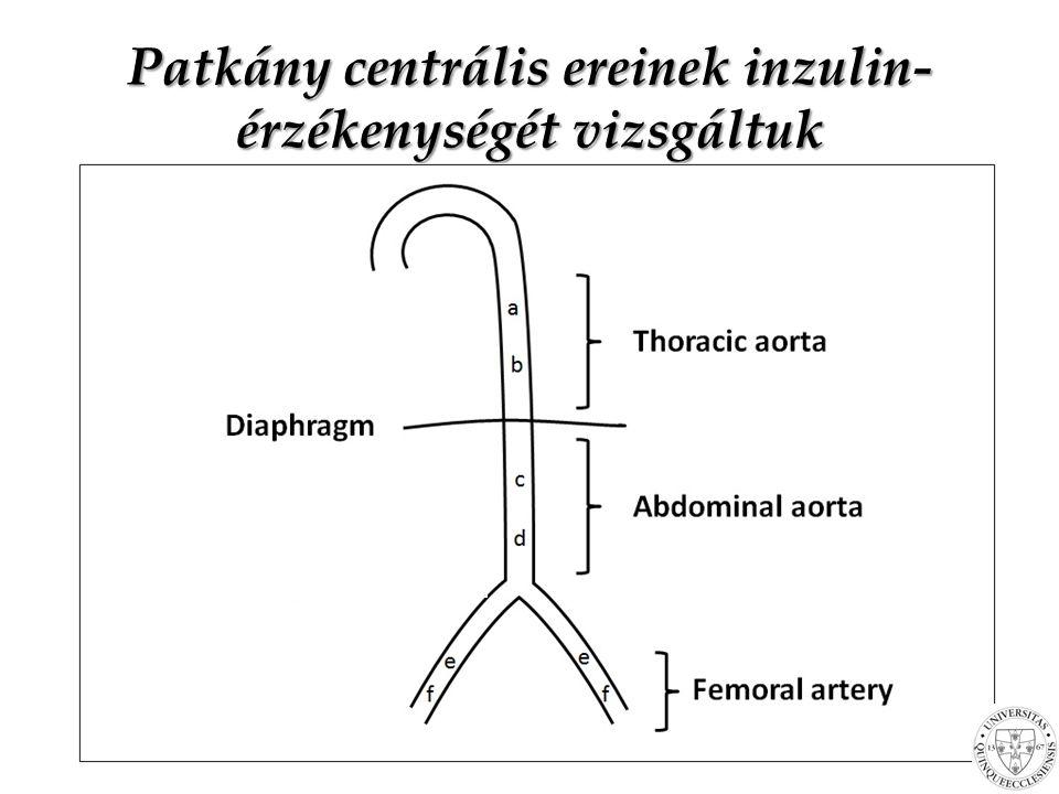 Patkány centrális ereinek inzulin-érzékenységét vizsgáltuk