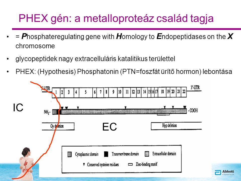 PHEX gén: a metalloproteáz család tagja