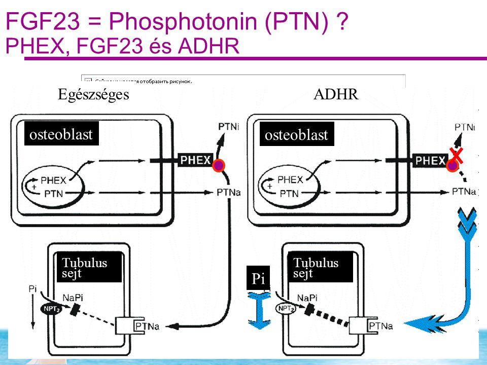 FGF23 = Phosphotonin (PTN) PHEX, FGF23 és ADHR
