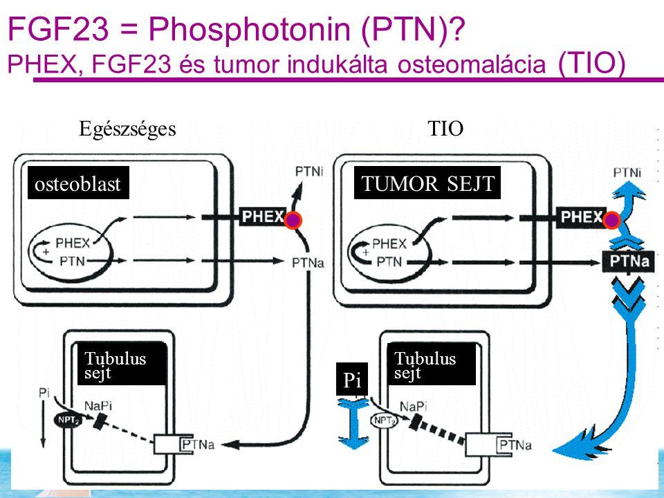 FGF23 = Phosphotonin (PTN)